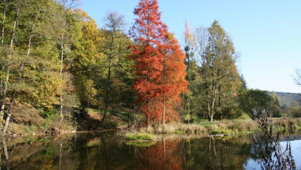 Arboretum Lenoir