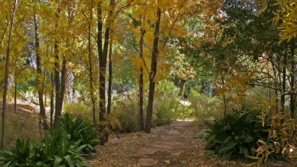 Arboretum van Bouillon