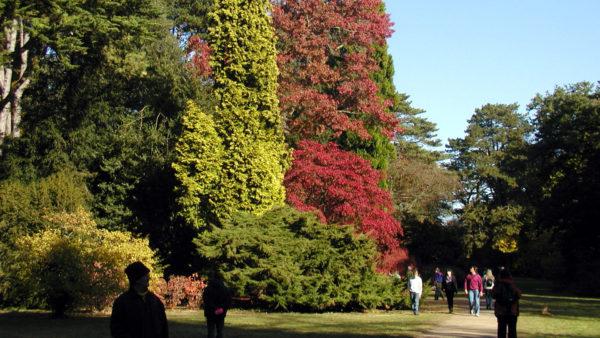 Arboretum van Gedinne