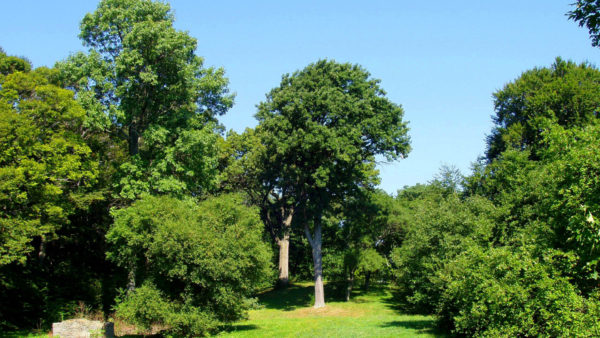 Arboretum van Profondeville