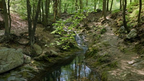 Arboretum van het Bos van de Vecquée
