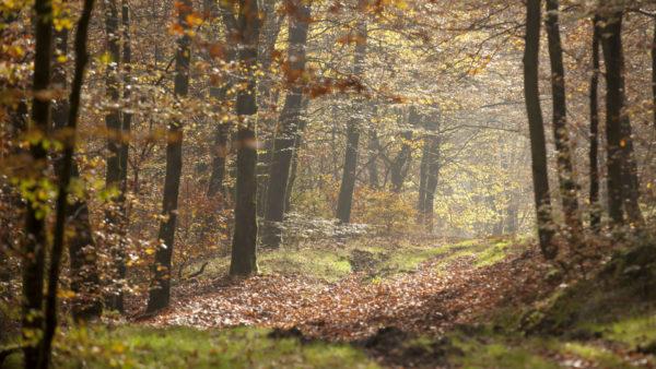 Bos van Anlier
