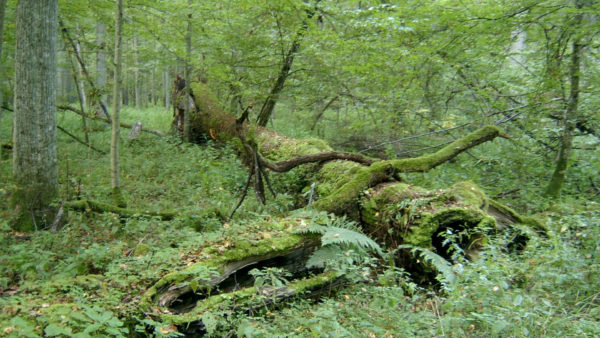 Bos van Pry