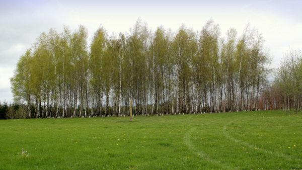 Bos van de Vrede