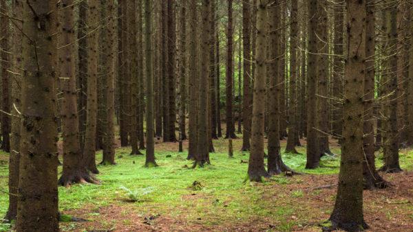 Natuurreservaat Jalna