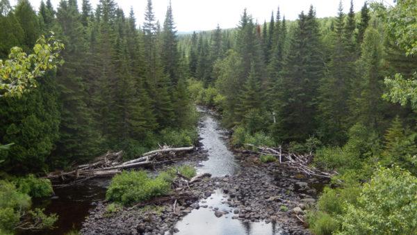 Natuurreservaat van de Baseille