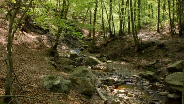 Ninglinspo - een unieke wandeling in de Ardennen