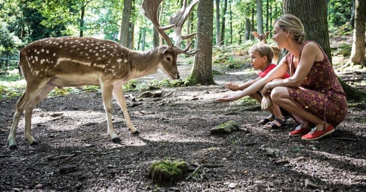 Parc a Gibier - Wildpark Saint-Hubert