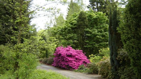 Sernapark Arboretum