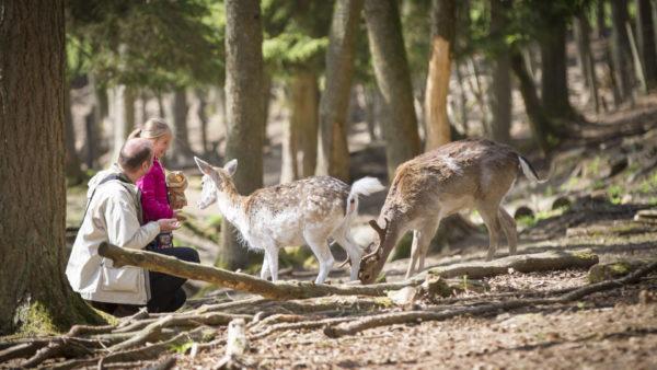 Wildpark La Roche-en-Ardenne
