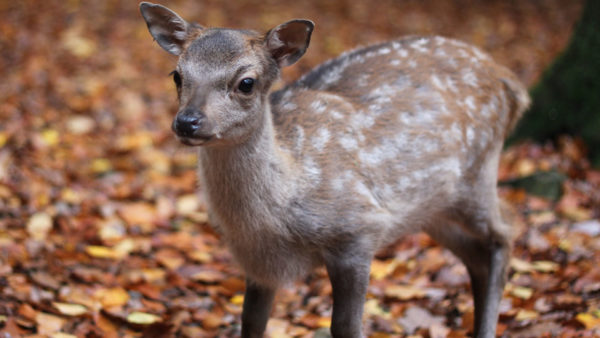 top3 dierentuinen in de Ardennen