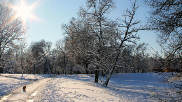 winterwandeling in de Ardennen