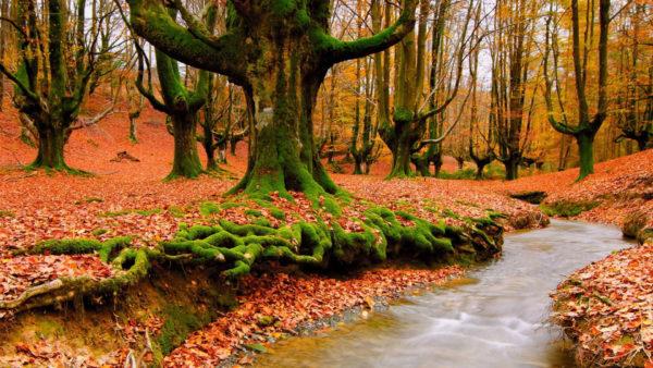 Herfstvakantie in de Ardennen