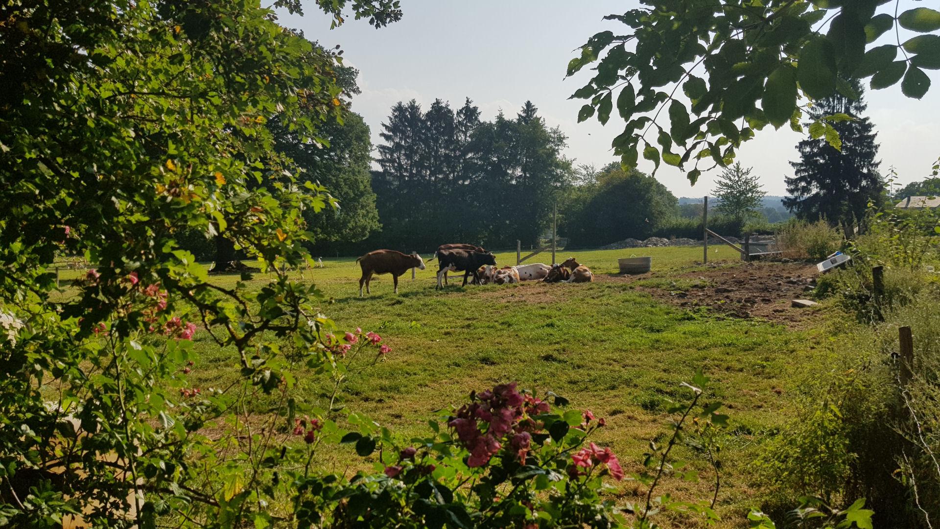 Tips vakantie in de Ardennen