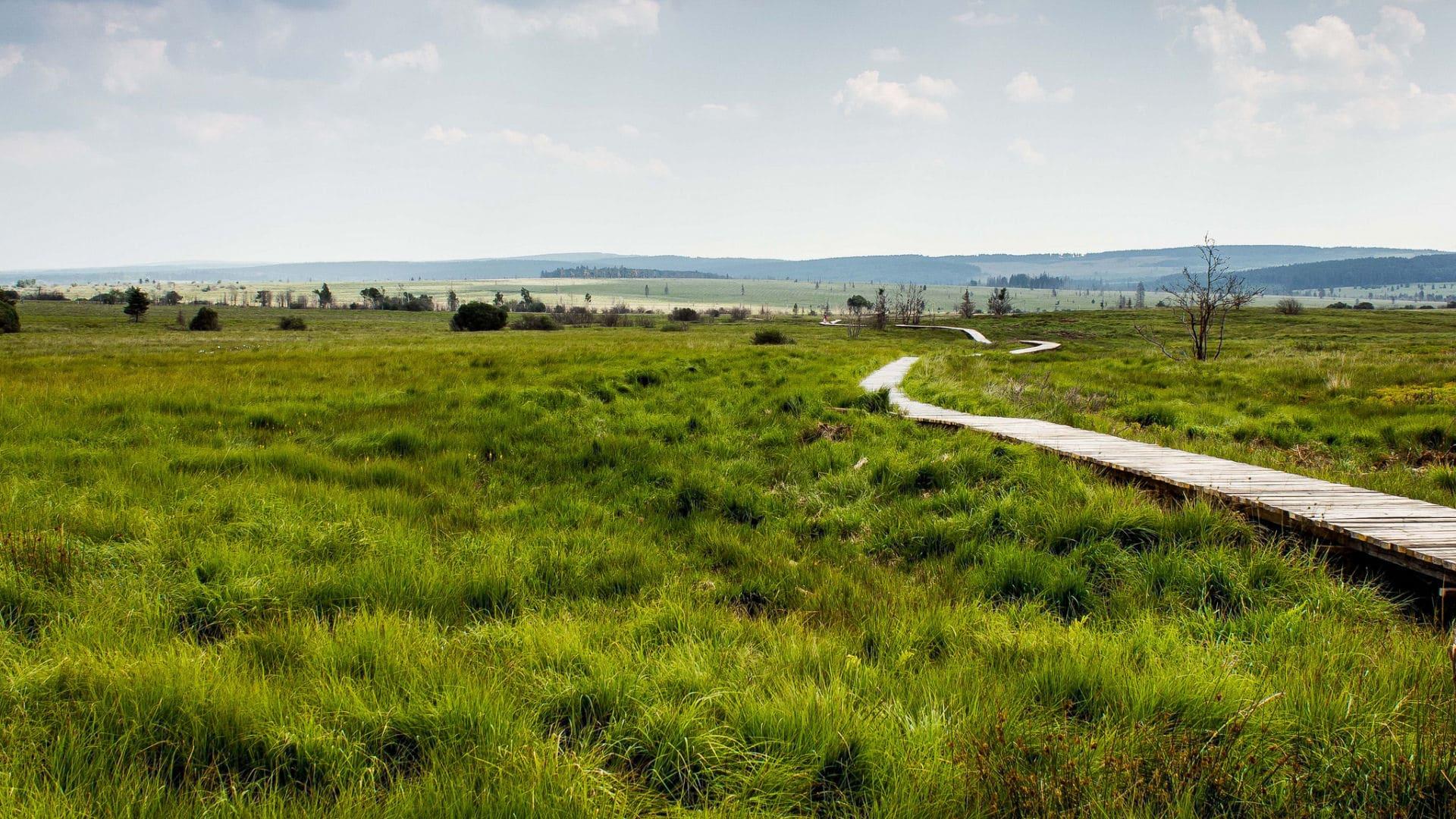 Wandeling Naar Baraque Michel Op De Hoge Venen Ardennen Nl Vakanties Informatie