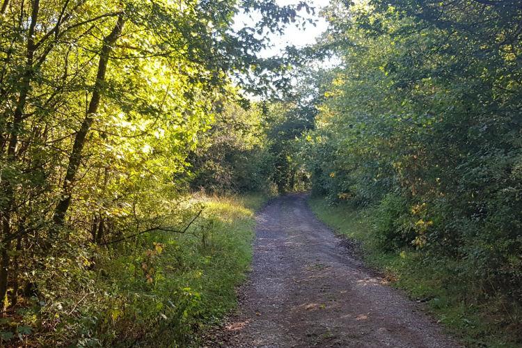 De wandeling over een bospad naar de Roche aux Falcons