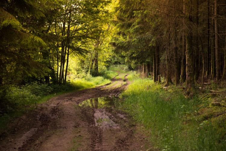 Wandelpaden in het Woud van Anlier