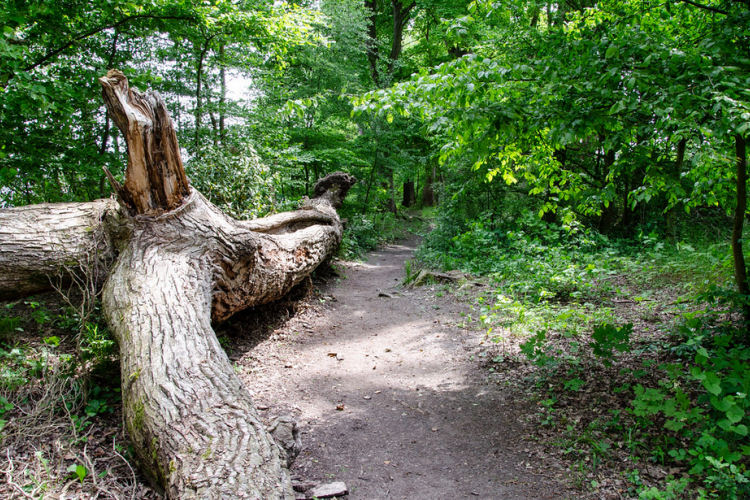 Schitterend bos van Blaimont