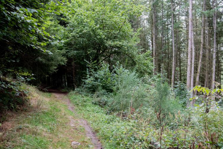 Dichte bossen op weg naar Redu