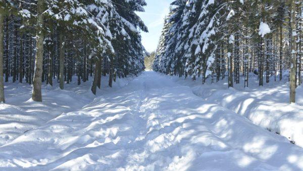 Veel sneeuw in de Ardennen