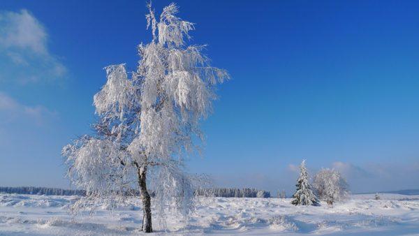 De 3 mooiste winterwandelingen in de Ardennen