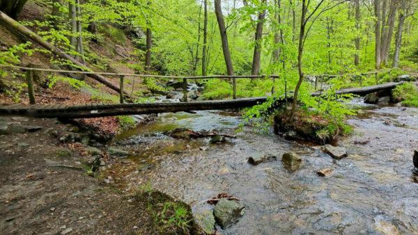 La Statte, de mooiste beek van de Ardennen