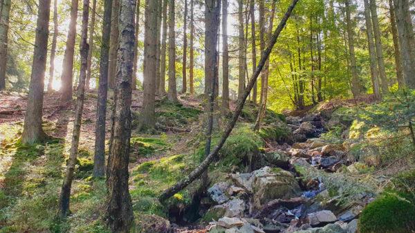 Mooie familie wandeling in het bos van Gospinal