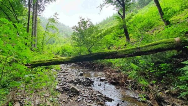 Escapardenne Eislek Trail - Etappe 1 - Kautenbach - Clervaux