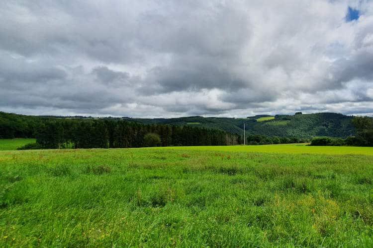 Mooie grasweide bij Kautenbach