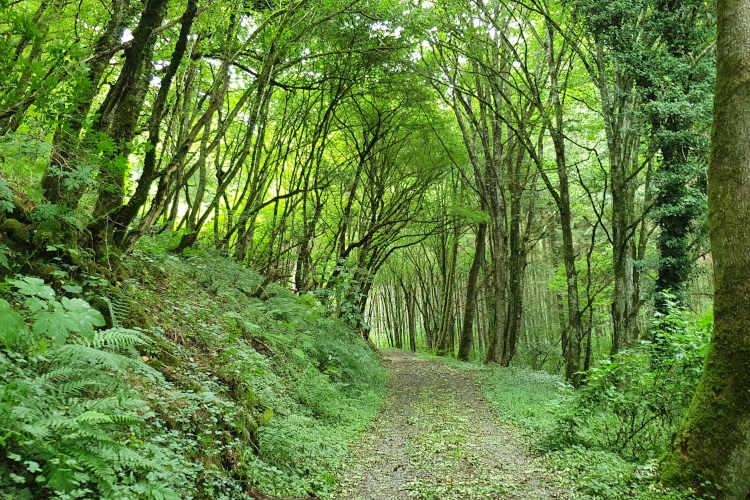 Wandelen door mooie bossen